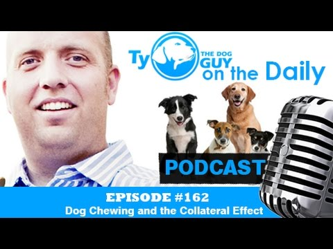 Episode #162 - Dog Chewing and the Collateral Effect - Utah Dog Trainer