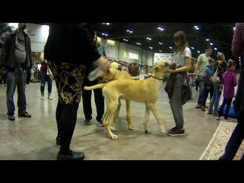 AKC Meet The Breed 2017