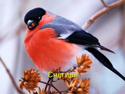 Видео птички