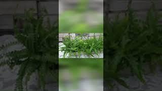 기다란 수반 만들기 feat.반려식물 수경재배로 키우기
