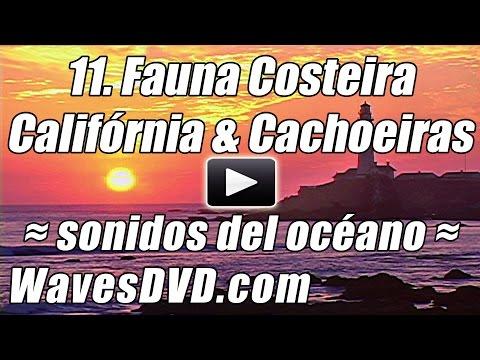 Thalita Bellotti - Ela é Top (Multishow) de YouTube · Duração:  13 minutos 6 segundos