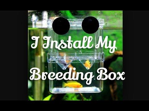 Breeding Box Installment