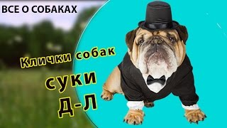 Клички собак. Суки. Д-Л.(, 2016-11-29T11:29:17.000Z)