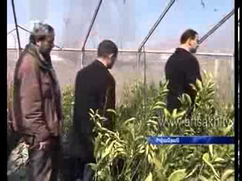 На Ирано - Карабахской границе будут оливки расти