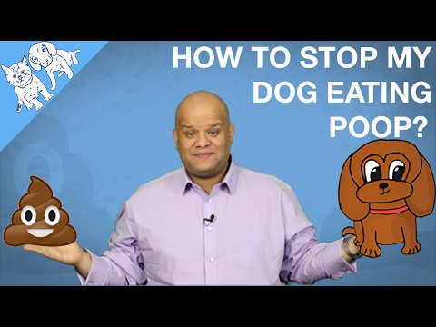 How To Stop My Dog Eating Cats Poop? Or His?
