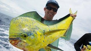 APSTULBO NET MOKSLININKAI: EGZOTIŠKA ŽUVIS PER TRUMPĄ LAIKĄ TAPO MONSTRE - Dolphin Fishing in Miami