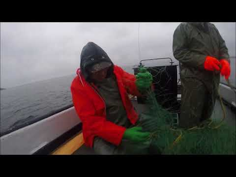 Setting & Checking Gill Net For Cod (Harbour Shoal)