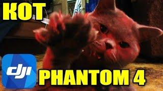 Квадрокоптер DJI Phantom 4 против кота! Обзор и распаковка(, 2016-06-13T14:55:06.000Z)