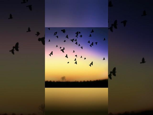 Изображение предпросмотра прочтения – ОльгаКоган читает произведение «Листья (Пусть сосны иели…)» Ф.И.Тютчева