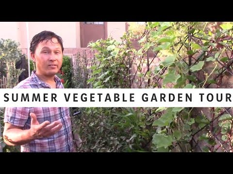 Full Summer Vegetable Garden Tour – 26 Raised Beds + Potted Fruit Trees