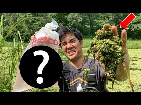 STOCKING PET STORE FISH TO SAVE MY POND EXPERIMENT!!! (Deadly Plant Removal)