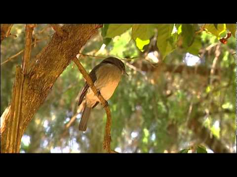 Ethiopia -An African Wildlife Paradise   2/3   www.birdvision.net