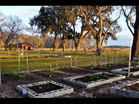 Vegetable Gardening in Florida in February