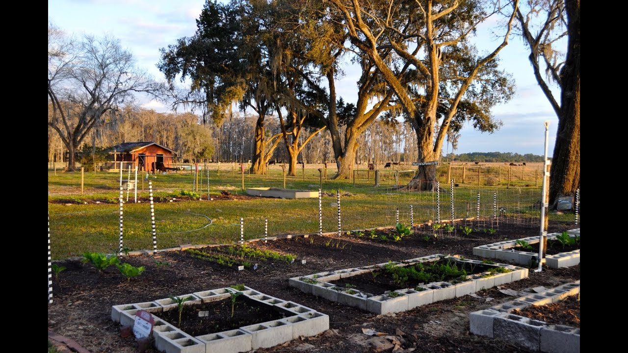Vegetable Gardening In Florida In February   YouTube Home Design Ideas