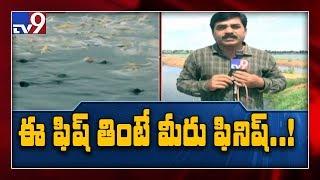 Highly polluted fish farms in Mahabubnagar - TV9