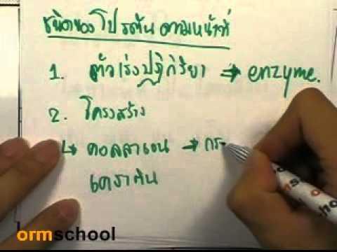 ormchem classic : สารชีวโมเลกุล ตอน01
