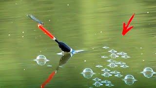 Добавил СПЕЦИЙ и КАРАСЯ тазик БУЛЬБЫ КАРАСЯ на ПОПЛАВОК рыбалка ЛЕТОМ на удочку