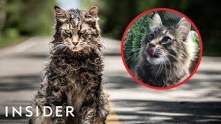 Download How Cats Are Trained For TV And Movies | Movies Insider Mp3 and Videos