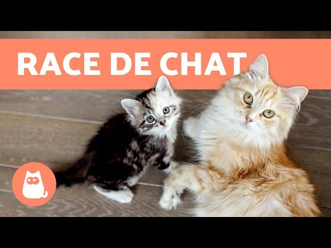 Comment Connaître La RACE De Son CHAT ? 😺