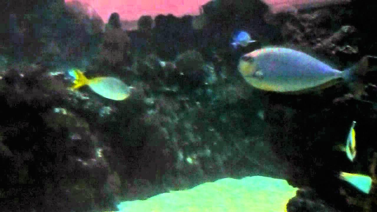 Grote aquarium Seaworld met maanvissen en diklip vissen dierentuin Arhnem    YouTube
