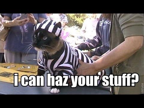 Klepto Cat Youtube