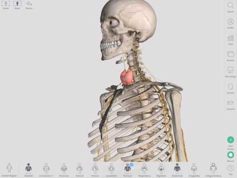 The Thyroid Gland Complete Anatomy Youtube
