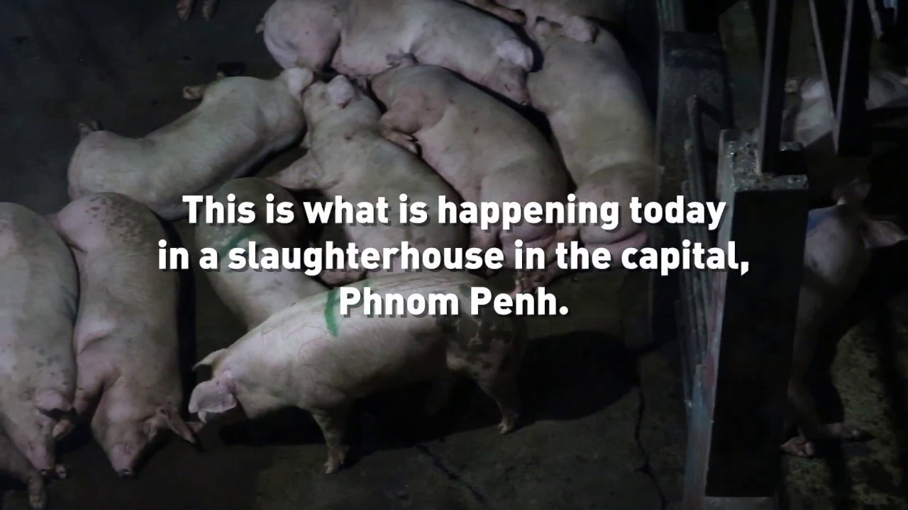 Inside a Pig Slaughterhouse in Cambodia