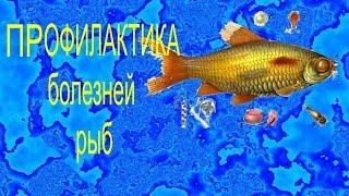 Профилактика болезней рыб