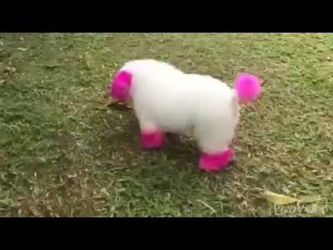 HAVE YOU EVER WISHED FOR YOUR TOY TO COME ALIVE?? - MY WISH WAS GRANTED | CUTE PET COMPILATION