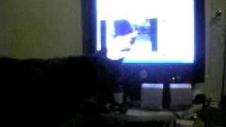 Miyako vs YouTube Kitten