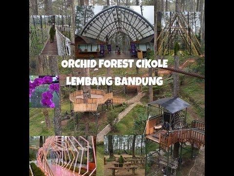 menikmati-indahnya-alam-ciptaan-allah-|-orchid-forest-cikole-lembang-bandung-|-tadabbur-alam