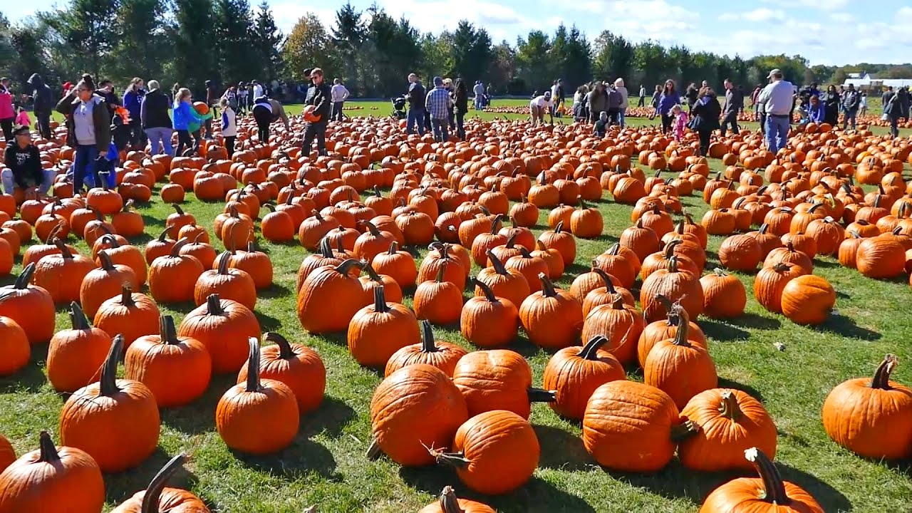 Pumpkin Picking At F W Schmitt S Family Farm Melville New York Youtube