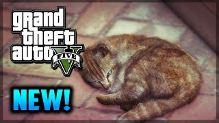 GTA 5 PS4 - Hunting Rare Animals - Lions, Whales, Cats Gameplay! (GTA 5 Gameplay)