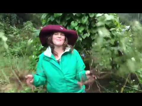 Red Root ~ Ceanothus Americanus ~ Blog #42 LymeCompass.net
