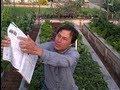 Best Salad Greens to Grow Indoors In Your Winter Kitchen Garden