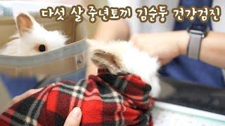 토끼 건강검진 : 다섯 살 순둥이 토끼 전문 동물병원 …