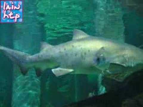 aquarium cattolica quot le navi quot shark and c 06