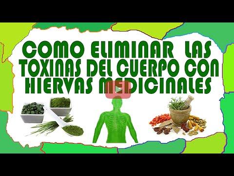 Como elimina las toxinas del cuerpo con hiervas naturales for Como mantener libres de toxinas