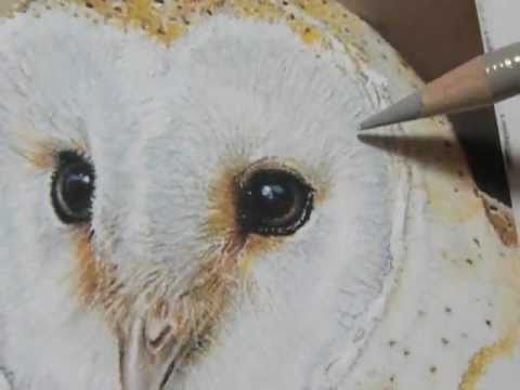 Painting A Day Demonstration Barn Owl By Roberta Roby Baer PSA