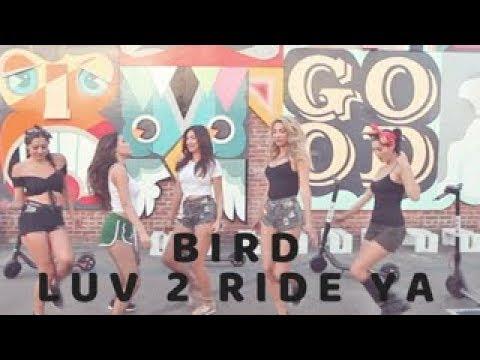 Bird Scooter Parody
