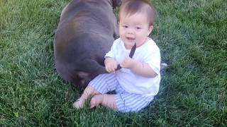 Baby with Dog Fails 😛 😜 😝 Dogs And Babies Are Best Friends 👉🏽 Funny Baby Video🧸