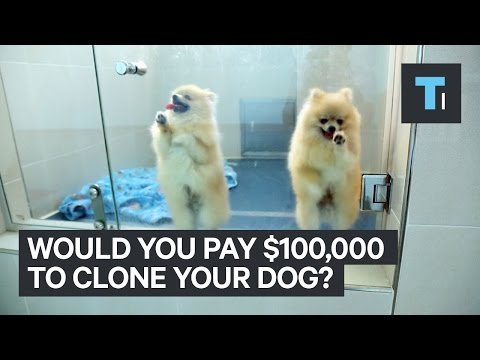 Clone your pet