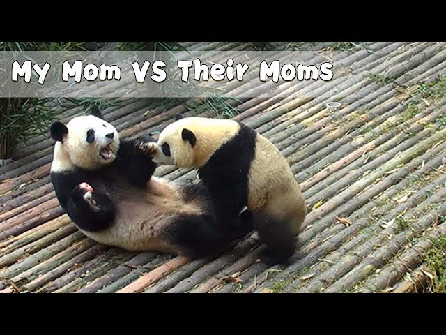 My Mom VS Their Moms | iPanda