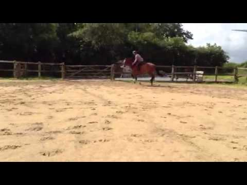 Alomar DS jumping4