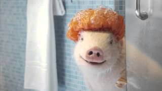 Video Maxwell the Geico pig cleaning up download MP3, 3GP, MP4, WEBM, AVI, FLV Desember 2017