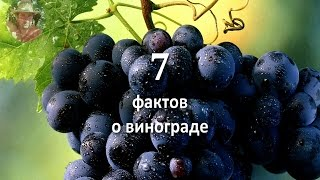 видео Школка при органическом выращивании винограда