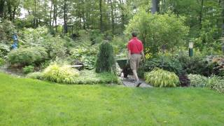 Moving a Japanese Maple