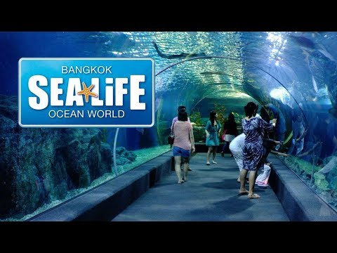 Sea Life Ocean World Aquarium - Bangkok, Thailand - Holiday Vlog Diary