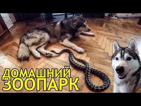 ХАСКИ, МАЛАМУТ  И ПИТОН / Husky, Malamute and Python