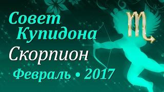 Скорпион, совет Купидона на февраль 2017. Любовный гороскоп.